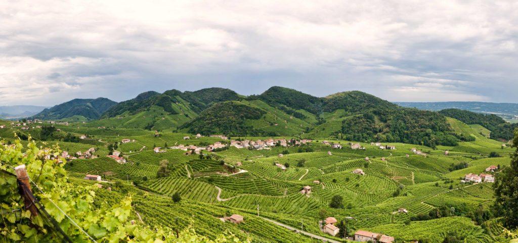 champagne vineyard valley