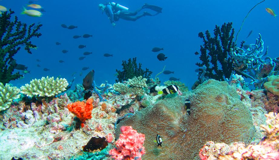 CORAL REEF'S OF THE MALDIVES